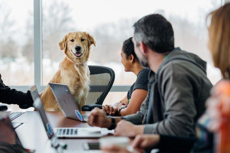 company-benefit-paw