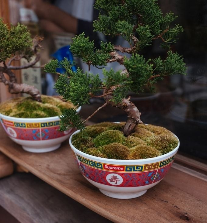 christmas-gifts-for-employees---bonsai