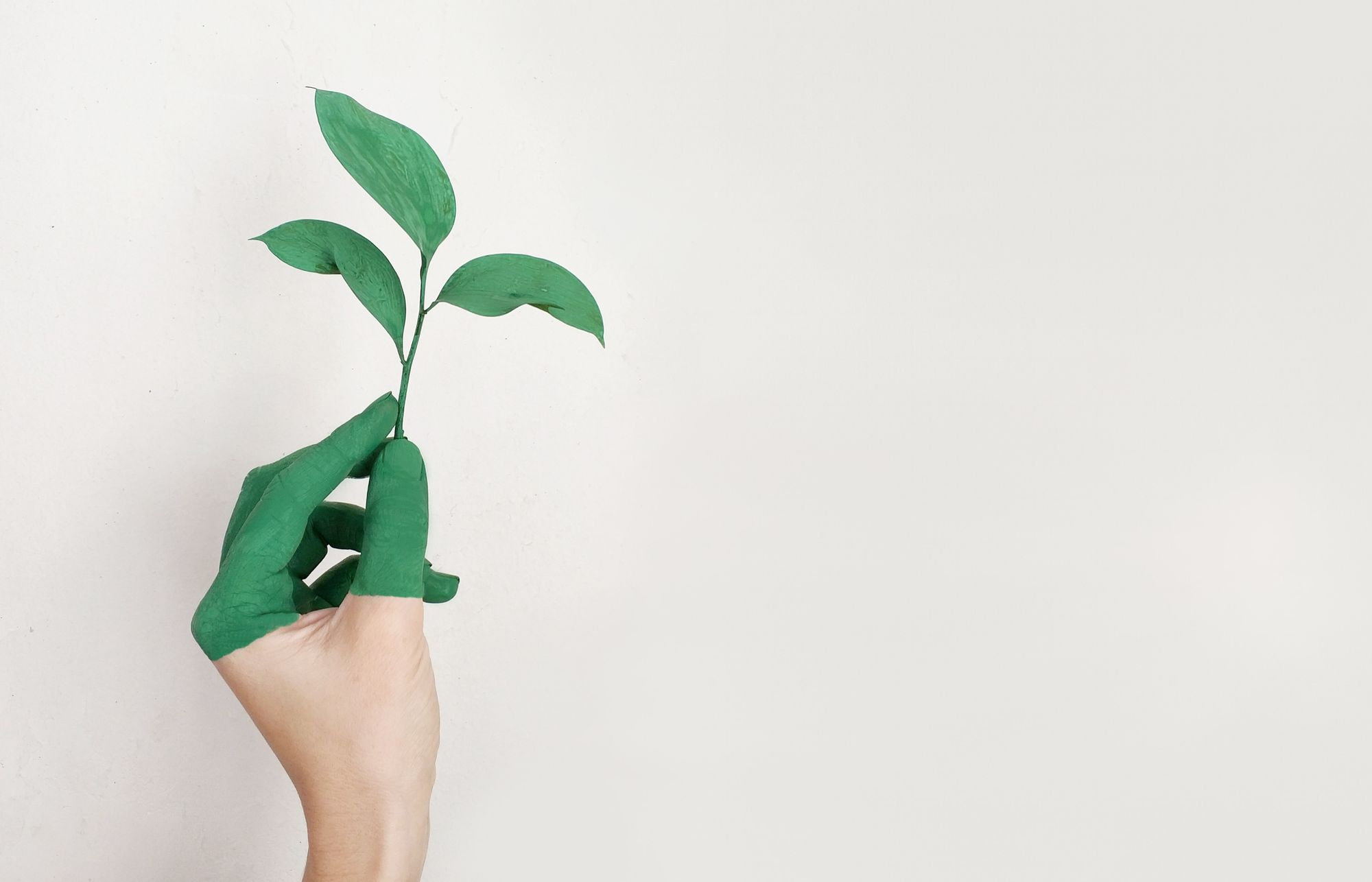 person-s-left-hand-holding-green-leaf-plant-886521