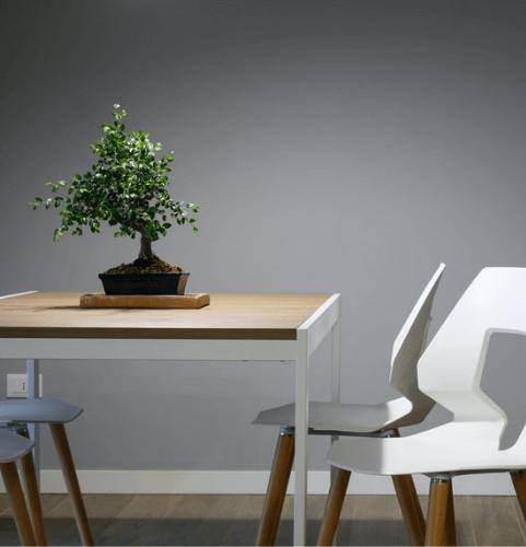 secret-santa-gift-ideas-for-coworkers-bonsai-tree