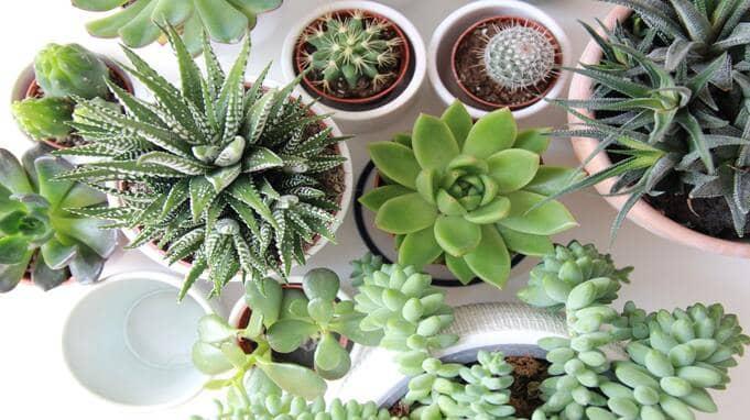 houseplants-virtual-gifts-for-secret-santa